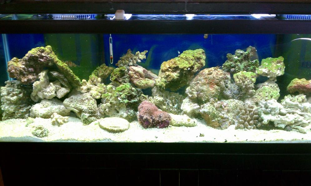 Coral Reef Aquarium - Basics - Problems with sump tank and some corals