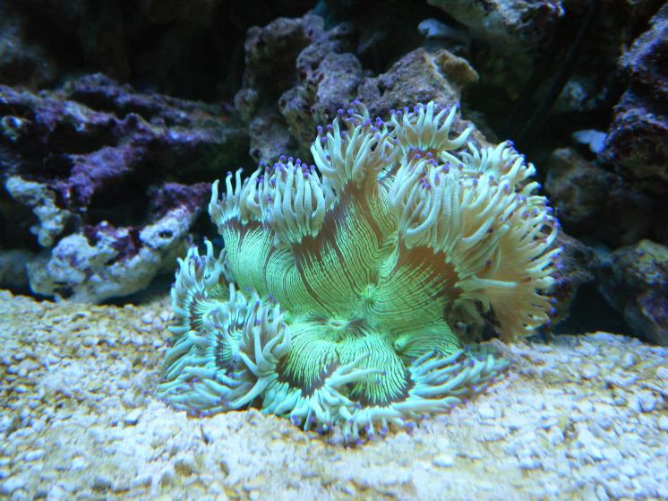 2795 egg drops march - Zoas duncans and more