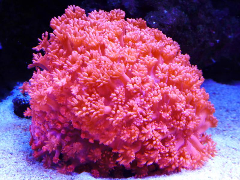 Red white blue contest flower pot coral additional information description mightylinksfo