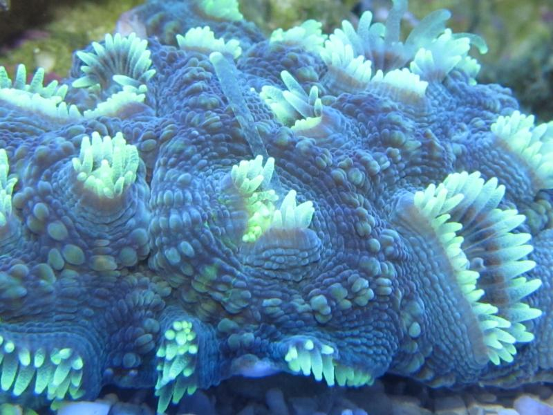 Coral Reef Aquarium - Coral Collector - Glow in the dark.