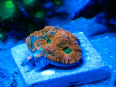 2791 dexter - Zoas duncans and more
