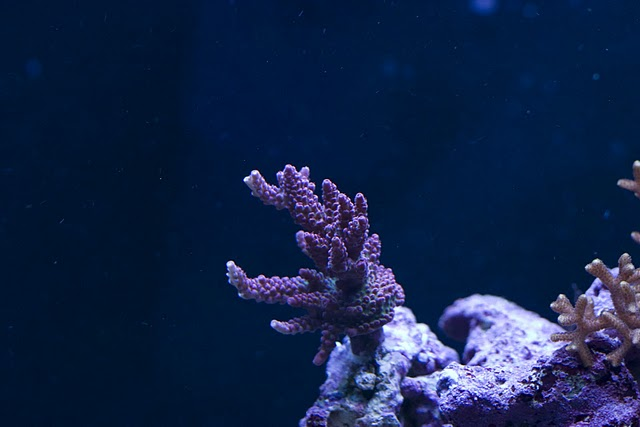 2798 frag 1 - Zoas duncans and more