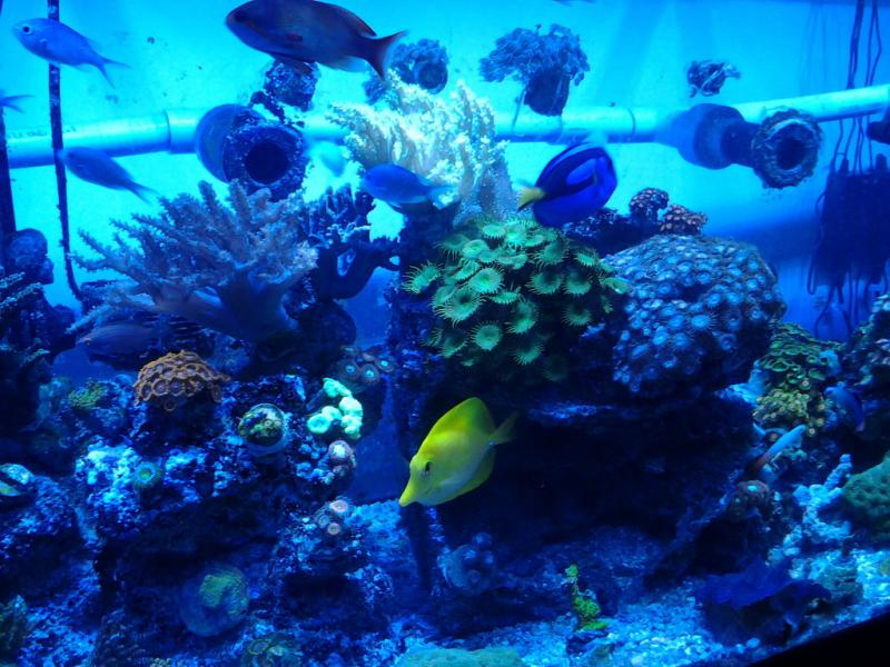 Coral Reef Aquarium - Coral Collector - sneak peek of 150 v2.0