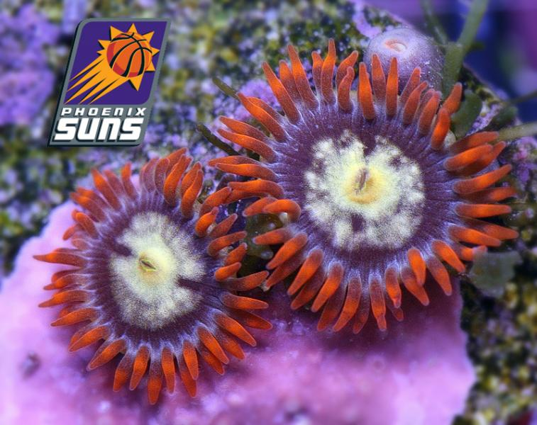 Coral Reef Aquarium - Coral Collector - Solar Suns Zoa