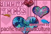 -amore-reefs-fish-coral-invert-photo-contest.jpg