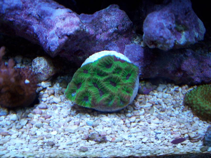 Coral Reef Aquarium - CR Contests - CR Contests - Previous Winners