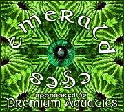 -emerald-eye-coral-contest.jpg