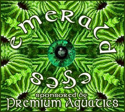 Coral Reef Aquarium - CR Contests - Emerald Eyes - sponsored by Premium Aquatics