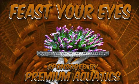Coral Reef Aquarium - CR Contests - Feast Your Eyes Photo Contest - sponsored by Premium Aquatics