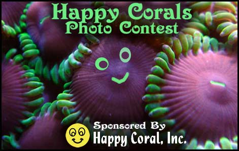 Coral Reef Aquarium - CR Contests - Happy Coral Photo Contest - sponsored by Happy Coral :-)