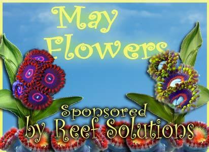 Name:  may-flowers-reef-solutions.jpg Views: 428 Size:  32.0 KB