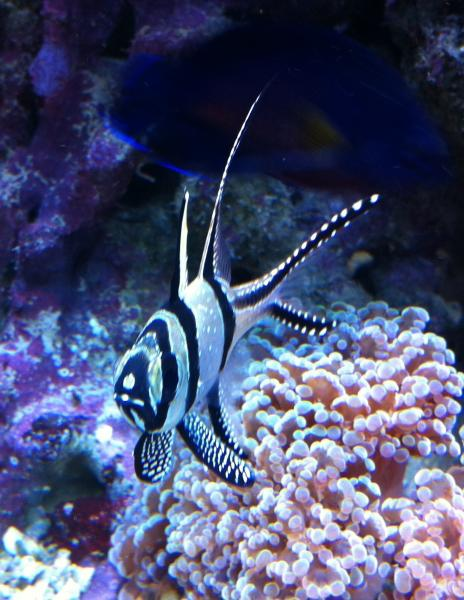 Coral Reef Aquarium - CR Contests - Mobile Fish Photo Contest - sponsored by Air, Water & Ice