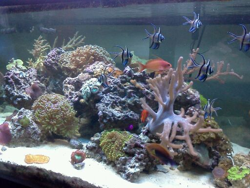 Coral Reef Aquarium - CR Contests - Mobile Photo Contest - sponsored by Premium Aquatics