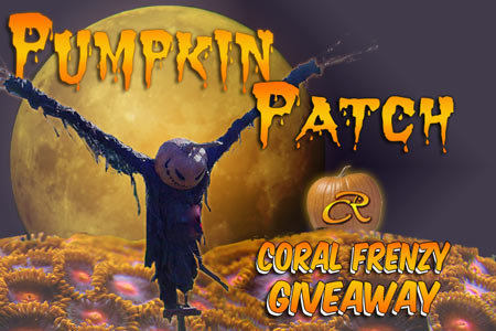 Coral Reef Aquarium - CR Contests - Pumpkin Patch - 3 Chances to Win!!! sponsored by Coral Frenzy
