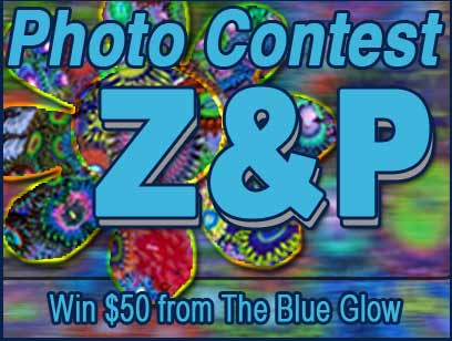 Coral Reef Aquarium - CR Contests - Z & P photo contest - sponsored by The Blue Glow
