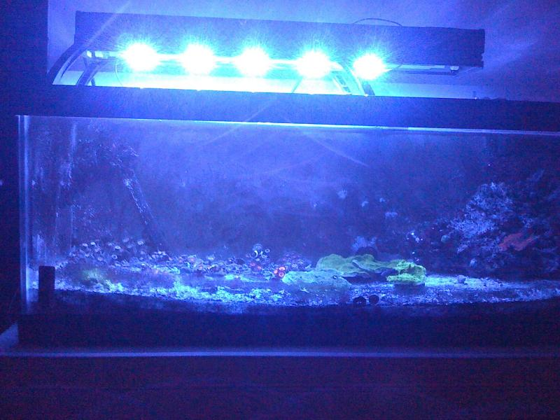 Coral Reef Aquarium - DIY Projects & Plans - AquaticLife LED retro fit build