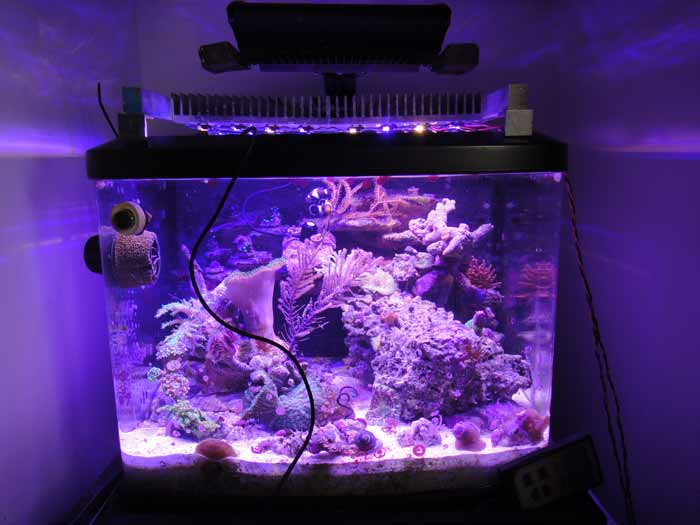 Coral Reef Aquarium - DIY Projects & Plans - DIY Apex to Meanwell Cable