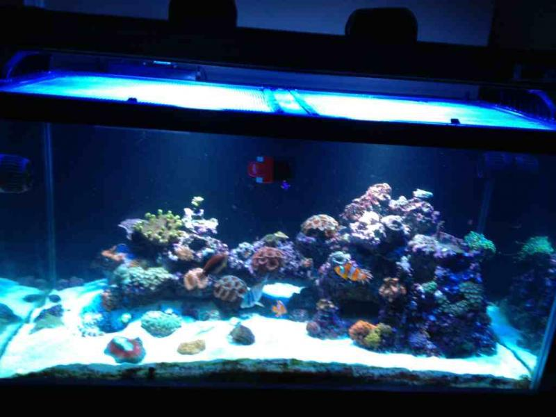 Coral Reef Aquarium - Equipment Sales & Trades - 120 breeder breakdown
