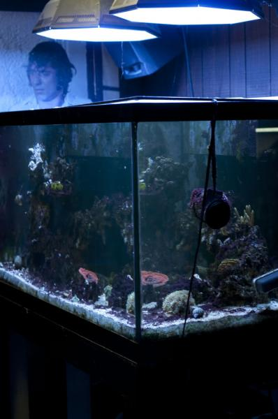 Coral Reef Aquarium - Equipment Sales & Trades - 120gal setup for sale