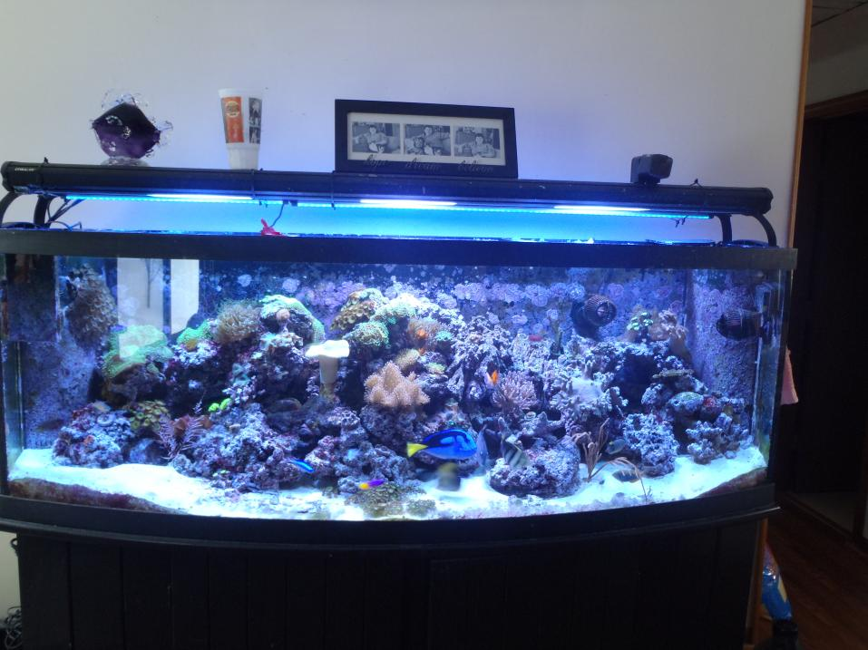 Coral Reef Aquarium - Equipment Sales & Trades - 155 Bowfront + all equipment included
