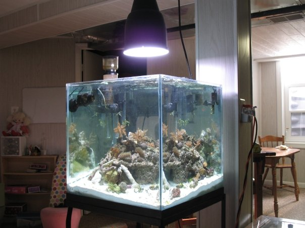 Coral Reef Aquarium - Equipment Sales & Trades - 175w MH  pendant