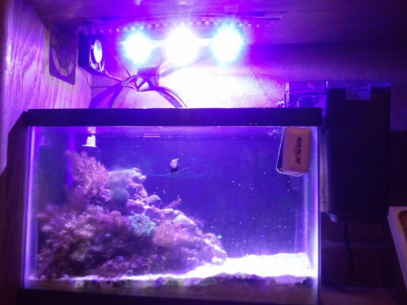 Coral Reef Aquarium - Equipment Sales & Trades - 2.5g tank, led, timer, rock, sand, etc... full set up