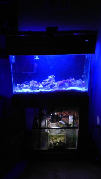 Coral Reef Aquarium - Equipment Sales & Trades - 29g main tank full setup, frag tank full setup