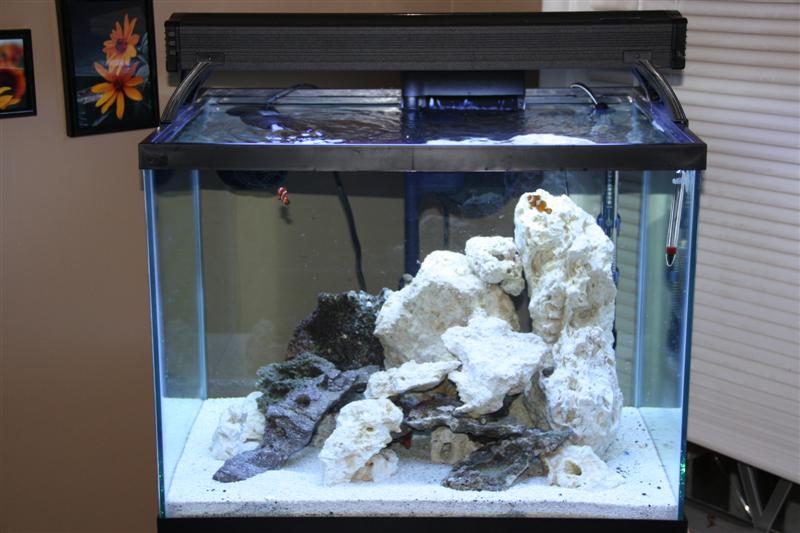 "Coral Reef Aquarium - Equipment Sales & Trades - 34gallon 24""x18""x18"" and 24"" aquatic life t5 fixture"