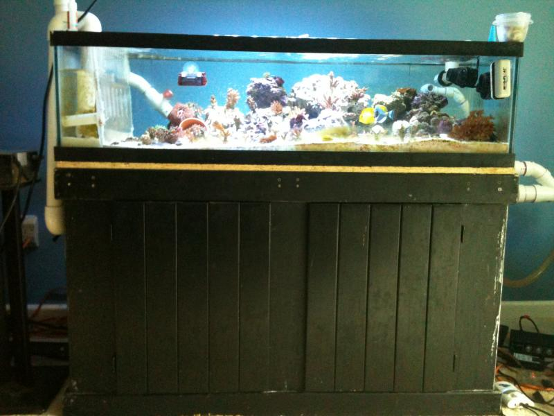 Fish tank maintenance 50 gallon top fin 50 gallon hooded for 50 gallon fish tank
