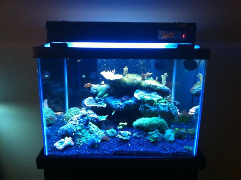 "Coral Reef Aquarium - Equipment Sales & Trades - 45g Cube AIO with Black Furniture Grade Stand/ 24"" 4 bulb T5HO with built in timers"