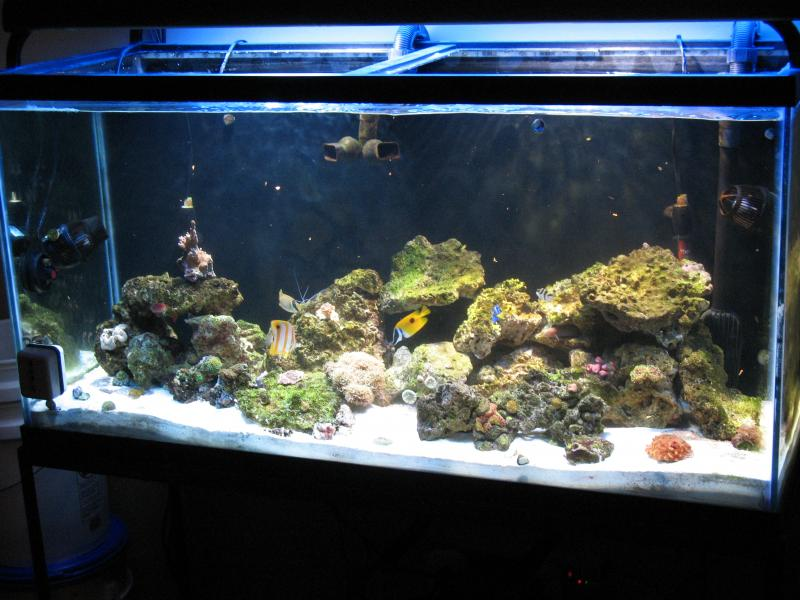 Coral Reef Aquarium - Equipment Sales & Trades - 48in. current outer orbit light