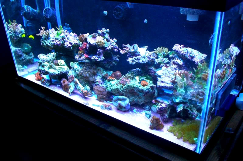 Coral Reef Aquarium - Equipment Sales & Trades - 55 Breeder, ATO W/ Pump and Test Kits For Sale