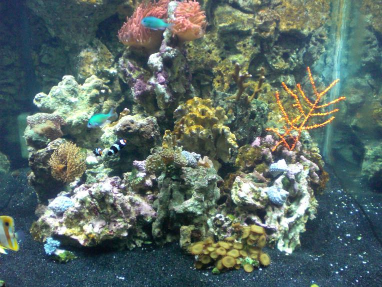 Coral Reef Aquarium - Equipment Sales & Trades - 60 gallon cube w/ stand & canopy, 400 watt MH & more