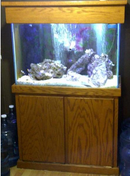 Coral Reef Aquarium - Equipment Sales & Trades - 65 Gallon Tall with 20G Sump