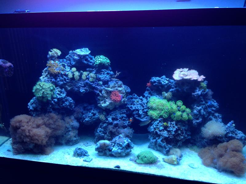 90 Gal Reef Moving Sale Everything Must Go