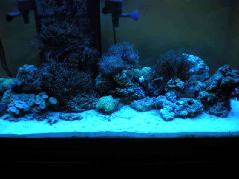 Coral Reef Aquarium - Equipment Sales & Trades - 90 Gallon Reef System for sale