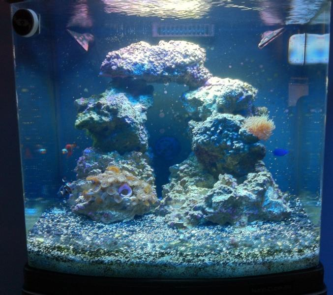 Coral Reef Aquarium - Equipment Sales & Trades - FS JBJ 28g NanoCube with EXTRAS!!!!!