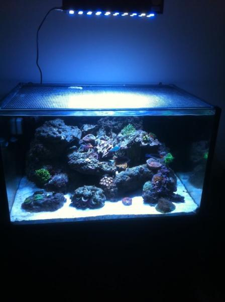 Coral Reef Aquarium - Equipment Sales & Trades - My pride and joy,  (tank setup complete)