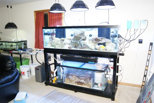 Coral Reef Aquarium - Equipment Sales & Trades - pre selling lumenbrite 3 mini and ballast's