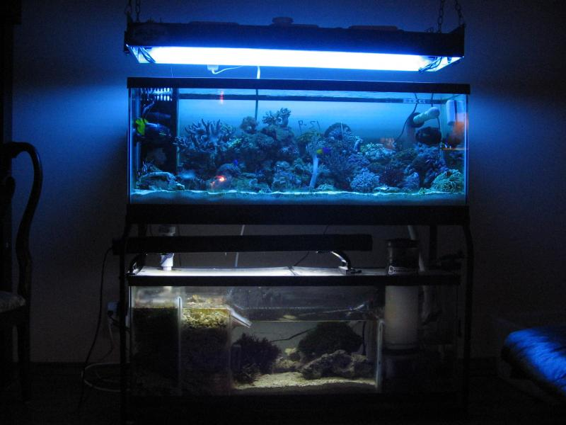 Coral Reef Aquarium - Equipment Sales & Trades - t5 complete light fixtures for frags