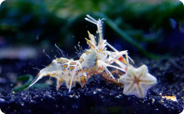 Name:  shrimp6.jpg Views: 1014 Size:  28.9 KB