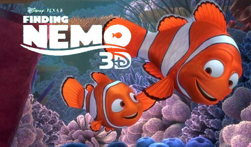 Image gallery information about clown fish for Clown fish care