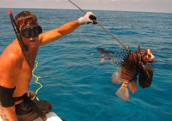Coral Reef Aquarium - Feature Articles - Lionfish Derby!