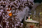 New, Creative Approach to Photographing your Reef-1-marine-figurines-clownfish.jpg