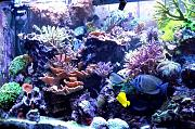 180Reefer's Bowfront Reef-180reefer-1.jpg