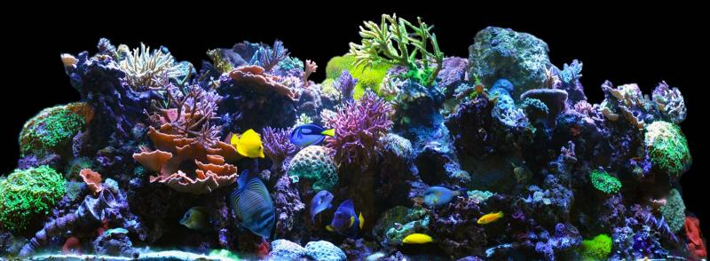 Coral Reef Aquarium - Featured Reef Aquariums - 180Reefer's Bowfront Reef