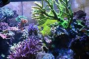 180Reefer's Bowfront Reef-left-display.jpg