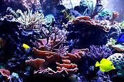 180Reefer's Bowfront Reef-right-display.jpg