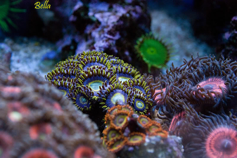 Name:  blue-hornets3.jpg Views: 270 Size:  97.2 KB