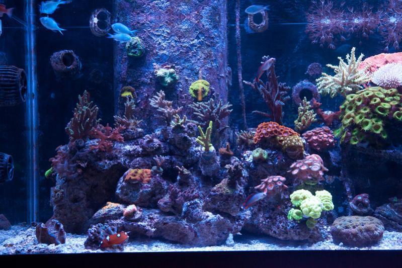 Name:  aquarium-left.jpg Views: 1601 Size:  90.5 KB